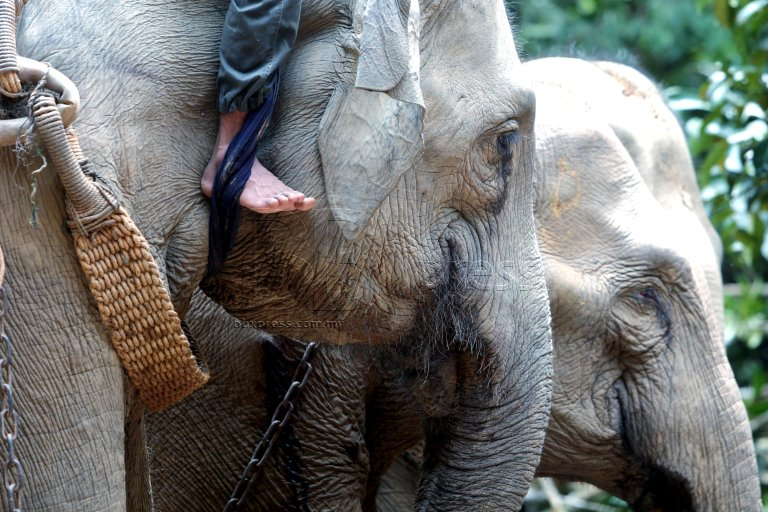 elephant translocation